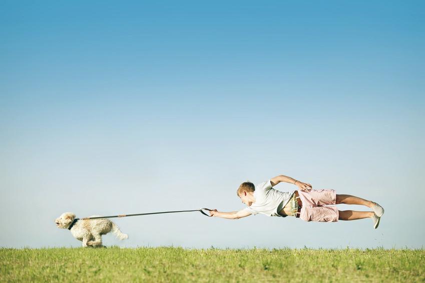 Hundeerziehung Leine ziehen 2