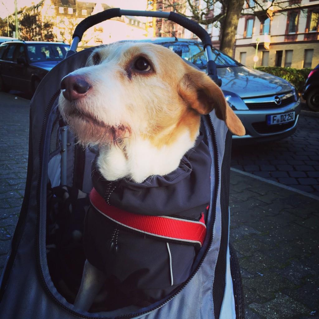 Hundebuggy-Kinderwagen