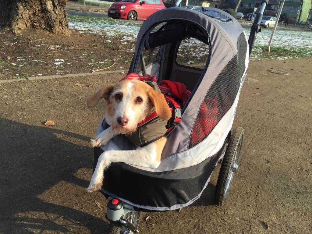 Kindewagen für Hunde