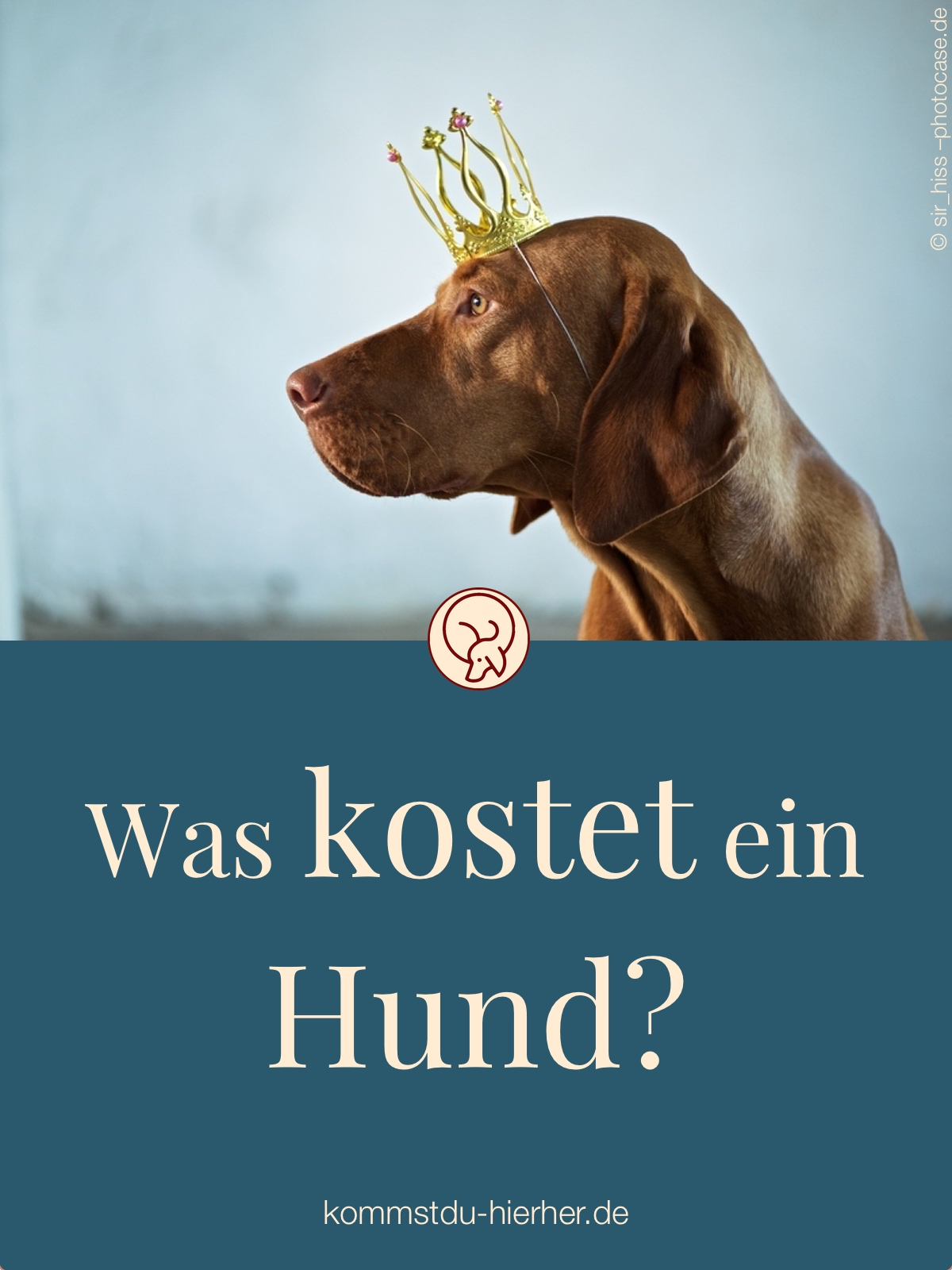 was kostet ein hund kommst du hierher. Black Bedroom Furniture Sets. Home Design Ideas
