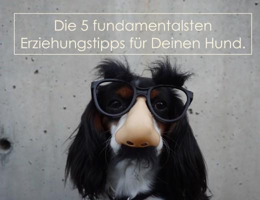 Hund Erziehung Tipps