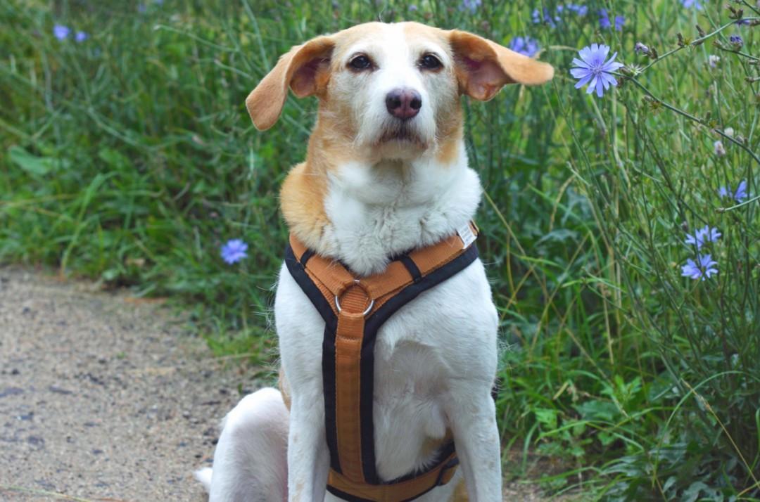 Hundebuch Ein Hund namens Brötchen