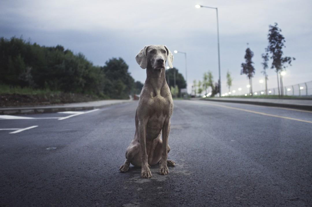 Hund ohne Leine in der Stadt