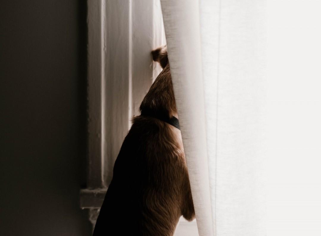 Hunde verlassen