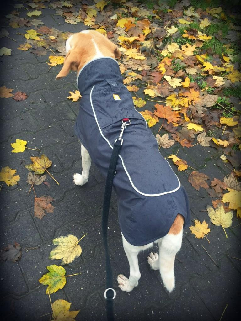 Ruffwear Aira Regenmantel Hund Rücken 11