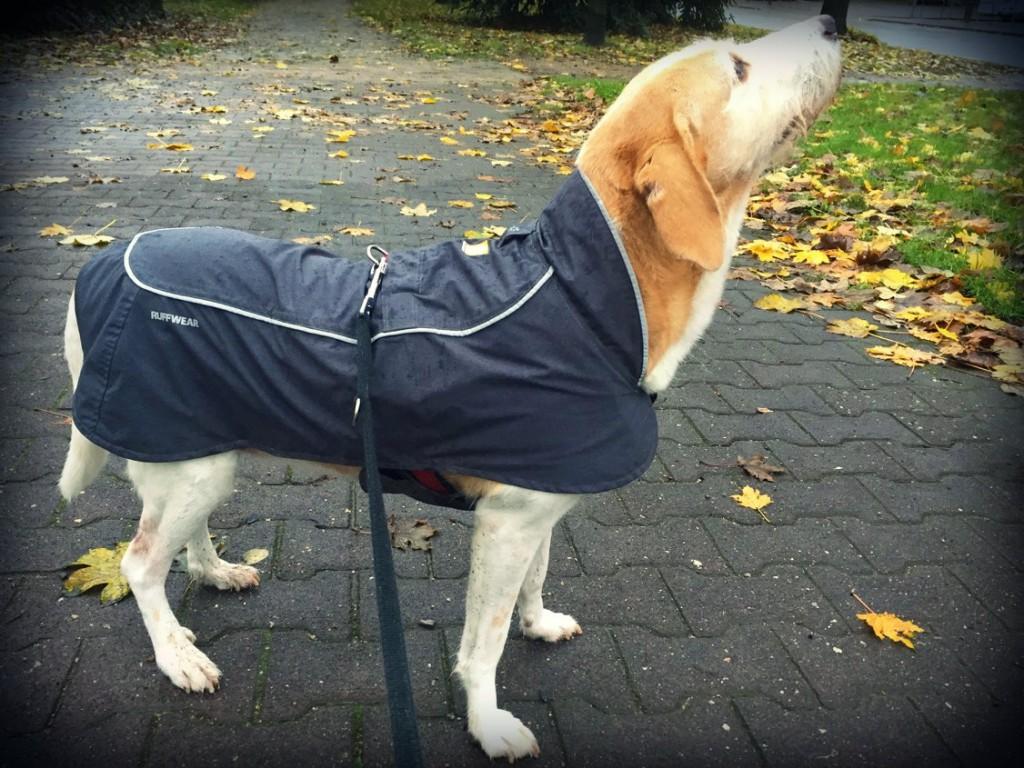 Ruffwear Aira Regenmantel Hund Seite 11