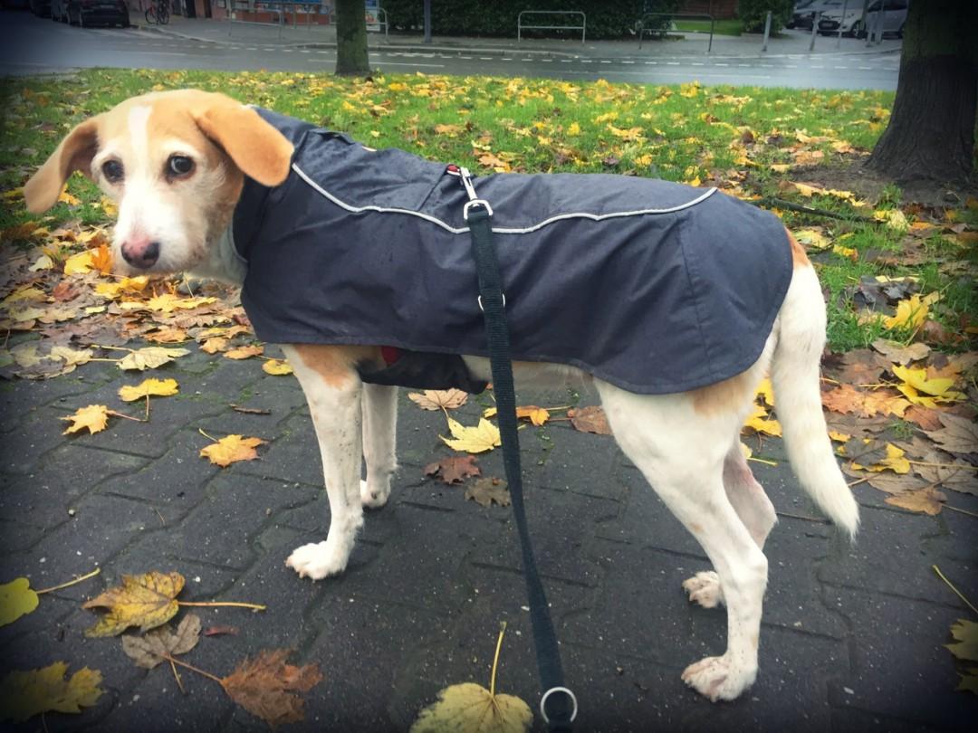 Ruffwear Aira Regenmantel Hund Seite 21