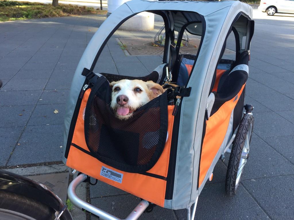 Comfort Wagon