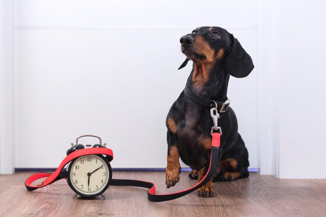 Wie viel Zeit kostet ein Hund
