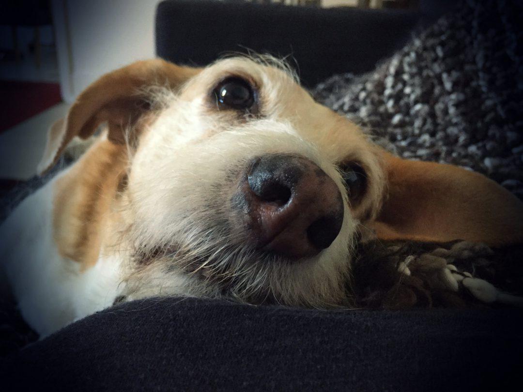Inkontinenz bei Hunden