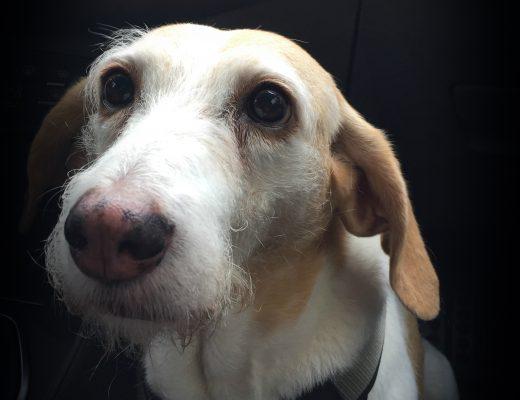 Hund Panini 5 Jahre