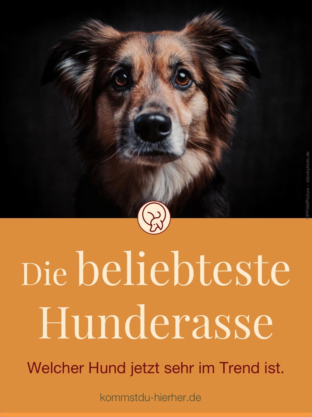 Beliebte Hunderassen Herkunft, Wesen und Haltung