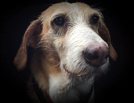 Hund im Regen